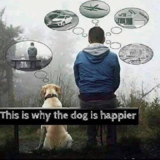 why-the-dog-is-happier