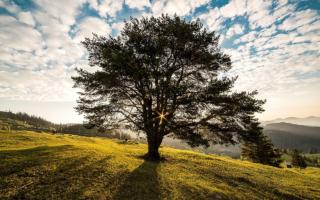 sunny-tree